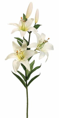Silk Flower Lily Spray in Cream White - 28 The beauty of a lily lies in the detail and these garden Beautiful Flowers Pictures, Beautiful Flowers Garden, Flower Pictures, Pretty Flowers, Lily Pictures, Beautiful Flower Drawings, Faux Flowers, Silk Flowers, White Flowers