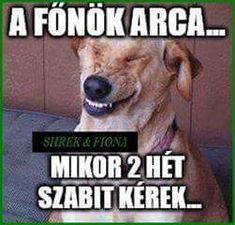 Minion, Troll, Haha, Jokes, Funny, Pictures, Photos, Husky Jokes, Ha Ha