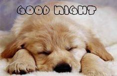 Good Night Puppy animals friends wish dog puppy pet sleeping comment good night Good Night Cat, Cute Good Night, Good Night Friends, Good Night Wishes, Good Night Sweet Dreams, Funny Good Night Images, Good Night Messages, Funny Images, Puppy Care