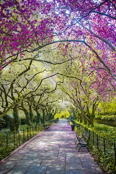 Spring, Central Park, New York City. This picture made me need to go to Central Park in the spring. I already think that it's beautiful, but this is just fantastically so. Beautiful World, Beautiful Places, Wonderful Places, Amazing Things, Simply Beautiful, Beautiful Park, Absolutely Gorgeous, New York City Photos, All Nature