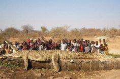 Crocodile géant, est une image drôle publiée le 15 Novembre 2013 par CARTAPUCE. Que pensez-vous de cette image drole insolite ?
