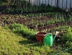 distanta de plantare la legume Plantar, Mai, Gardening, Agriculture, Garten, Lawn And Garden, Garden, Square Foot Gardening, Garden Care
