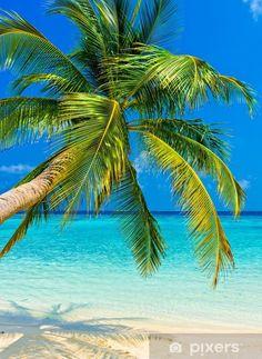Palm Tree Art, Palm Trees, Beach Wall Murals, Porch Wall, Green Beach, Beach Wallpaper, Tropical Beaches, Beach Scenes, Green Trees
