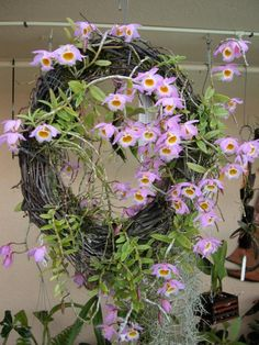 Orchid Mounting Ideas | Mounting on different kinds of medias-den.-loddigessi-wreath.5.2010 ...