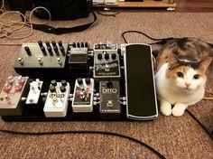 Beautiful board...Beautiful cat! #pedalboardcat    Photo credit: @jaredkerim (instagram)