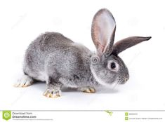 Image result for rabbit sniffing