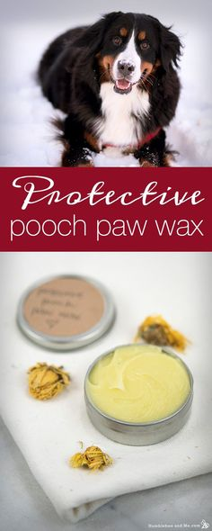 Protect your dog's paws from snow, salt, and sand with this all-natural Protective Pooch Paw Wax recipe using lanolin, olive oil, and healing calendula.