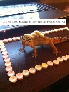 Funny pictures about My gecko hates me. Oh, and cool pics about My gecko hates me. Also, My gecko hates me. Funny Animal Memes, Cute Funny Animals, Funny Animal Pictures, Cute Baby Animals, Funny Cute, The Funny, Hilarious, Penguin Animals, Animal Pics