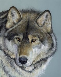 "Gayle Mason, ""Wolf"", acrylic and colored pencil"