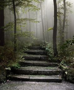 forests, stone steps, appalachian trail, stairs, stairway, into the woods, path, place, photographi