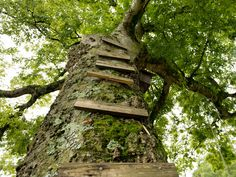 DIY Kids' Outdoor Play Spaces, Just Like You Remember >> http://blog.diynetwork.com/maderemade/2013/07/09/the-giving-tree-play-station/?soc=pinterest