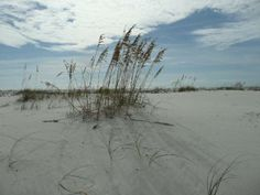 ALABAMA BEACHES | Living in Alabama! - Gulf Coast Just 4 Hours Away!