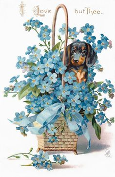 Dachshund Dog^Antique Wicker Basket^Forget Me Not Vintage Postcard Arte Dachshund, Dachshund Vintage, Vintage Birthday Cards, Vintage Greeting Cards, Vintage Postcards, Vintage Images, Vintage Flowers, Blue Flowers, Decoupage