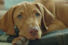 Vizla would have to be my next favorite breed! Maybe one day I will have one.