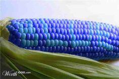 Blue corn | BLUE Things :) | Pinterest