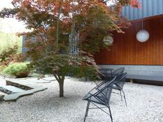japanese maple courtyard - Google Search