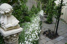 Jasmine espalier, diamonds of black mondo grass, and columns of hornbeams | A formal garden apartment, HEDGE Garden Design & Nursery