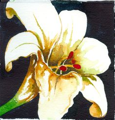 Lily White - Sold