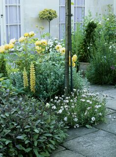 Love the yellow plants and blooms Blue Garden, Garden Pool, Garden Paths, Roses Garden, Pool Shed, Rose Garden Design, Yellow Plants, Herbaceous Border, Get Outside
