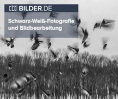 Artikel über die Erstellung von Schwarz-Weiß-Bildern und die optimale Bildbearbeitung für eure Fotos. Viel Spaß beim Lesen und Entdecken! #schwarzweiß #Fotos #Bildbearbeitung #Hilfe #Fotografie #BilderDE