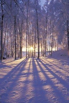 ☆ Winter beauty