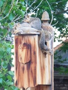 A happy home for the squirrels. ♥  http://www.squirrel-rehab.org/misc/word.htm