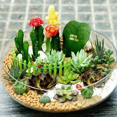 The 67 Good Indoor Plants for Minimalist Homes You Can Get For Inspire Succulent Seeds, Succulent Gardening, Succulent Terrarium, Cacti And Succulents, Planting Succulents, Plants In Glass Bowl, Cactus House Plants, Pot Jardin, Bonsai Seeds