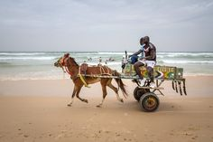 Donkey cart on beach (Malika Surf Camp) Sénégal