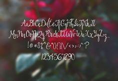 Briar Rose ~ Script Fonts on Creative Market Script Alphabet, Typography Letters, Typography Design, Hand Lettering, Calligraphy Fonts, Script Fonts, Silhouette Vinyl, Briar Rose, Vinyl Cutting