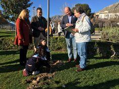 Alumnos del colegio Marcelo Spínola plantan 23 variedades de olivar en el parque del Seminario