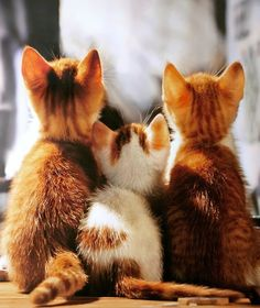 A back view is just as cute! #kittens #pets facebook.com/sodoggonefunny