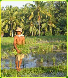 Bali Nature Herbal Walks - Ubud, Bali Tour Activities