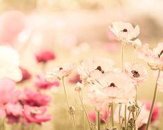 Blumen Fotografie floral botanische Fotografie Vintage fühlen 8 x 10 24 x 36 Kunst Fotografie Frühling Dekor Kinderzimmer Rosa Creme große Pastell