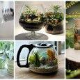 DIY Mini Fairy Terrarium Garden Ideas