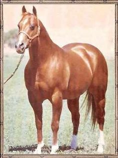 Doc Bar Doc Bar was a Quarter Horse stallion that was bred to be a racehorse, became an outstanding halter horse, and in his sire career revolutionized the cutting horse industry.