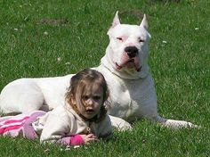 """Dogo Argentino.. He's looking like """" hey you creep, keep walking mother f#%**%#"""