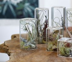 Pretty! Love these rectangular glass terrariums with beautiful air plants inside!