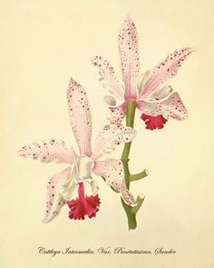 BEDROOM: I have an old calendar with orchid artwork that could be turned into pretty prints to frame!