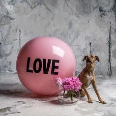 3 foot Big Love Ball with Loki | Color : Kitten Tongue | Photo by Bob Garlick