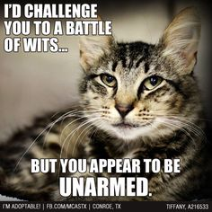 Said every cat to every dog ever! #cats #humor #funny