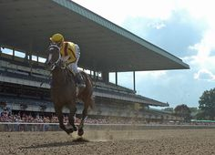 Leading ladies of racing Rachel Alexandra (Medaglia d'Oro) and Zenyatta (Street Cry {Ire}) are two of the four Thoroughbred finalists for the Hall of Fame class of 2016, which also includes two trainers and …