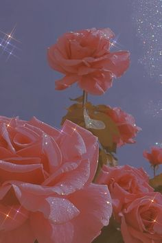 Baby Pink Aesthetic, Aesthetic Colors, Flower Aesthetic, Aesthetic Collage, Aesthetic Anime, Iphone Wallpaper Tumblr Aesthetic, Aesthetic Pastel Wallpaper, Aesthetic Backgrounds, Aesthetic Wallpapers