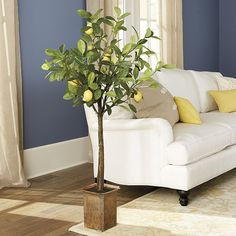 If you can't grow one where you live, our faux Potted Lemon Tree is the next best thing. The lemons and leaves vary in size and shading just like those on a live tree. The textured trunk enhances the convincing natural look. Potted Lemon Tree features: Antiqued terra cotta finish pot Realistic soil