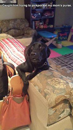 Pickpocketing Dog