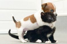 Kitten And Puppy Playing - reminds me of my furry babies!