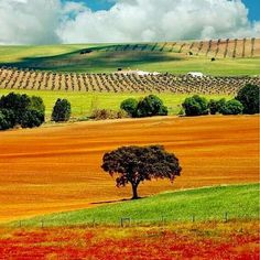 Portugal, Alentejo, nature, architecture and for wine lovers! Places In Portugal, Visit Portugal, Portugal Travel, Spain And Portugal, Places To Travel, Places To See, Places Around The World, Around The Worlds, Monsaraz