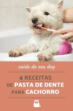 dog training,teach your dog,dog learning,dog tips,dog hacks Pet Dogs, Dogs And Puppies, Dog Cat, Dog Dental Care, Pet Care, Shih Tzu, West Terrier, Animals And Pets, Cute Animals
