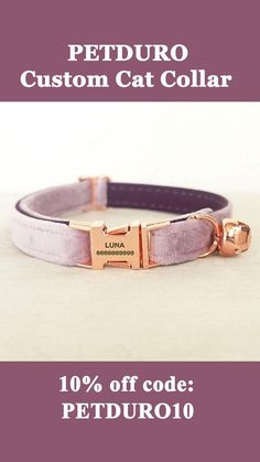 Funny Cute Cats, Silly Cats, Cute Cat Gif, Custom Cat Collars, Personalized Cat Collars, Baby Kittens, Cats And Kittens, Talking Cat Video, Best Cat Gifs