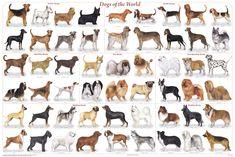 dog breed list 2