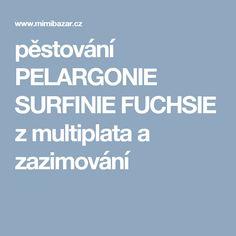 pěstování PELARGONIE SURFINIE FUCHSIE z multiplata a zazimování